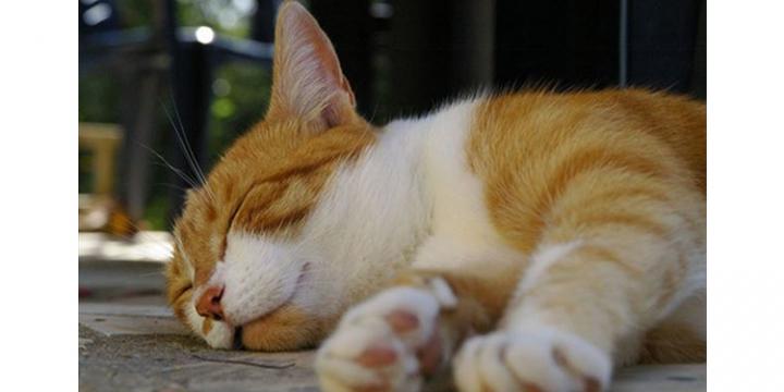 猫 睡眠.fw